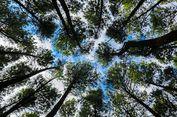 Glamping di Hutan Pinus, Wisata Baru Dekat Candi Borobudur