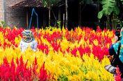 5 Spot Wisata Selain Umbul, Cocok untuk Liburan di Klaten