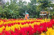 Klaten Kini Punya Taman Bunga Bernuansa Belanda