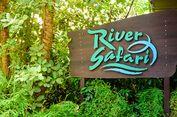 5 Tips Agar Kunjungan ke River Safari Singapura Lebih Menyenangkan