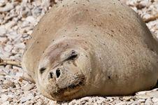 Lewat Rantai Makanan, Mikroplastik Sudah Mengontaminasi Anjing Laut