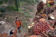 Sintang Luncurkan Forum Koordinasi Pembangunan Kelapa Sawit Berkelanjutan