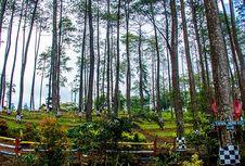 Wonogiri Juga Punya Hutan Pinus yang Instagramable, Tertarik?