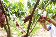 Temuan Baru: Cokelat Jadi Mata Uang di Peradaban Maya Kuno