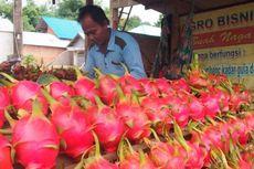 Pemerintah Dorong Peningkatan Ekspor Buah Naga