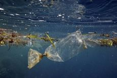 Pakar Ciptakan Sistem Pembersihan Sampah Plastik di Lautan Pasifik