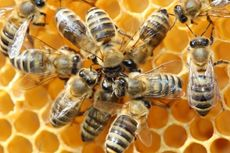 Kepunahan Serangga Liar Bahayakan Pasokan Pangan Dunia, Kok Bisa?