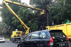 Kasudin Kehutanan Jakbar Tak Setuju Pembangunan Trotoar dengan Menebang Pohon