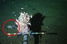 Bertulang Lunak, Ikan Ini Tunjukkan Adaptasi Hidup di Habitat Ekstrem