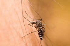 Akibat Cuaca Ekstrem, 641 Warga Palembang Kena Demam Berdarah Dengue
