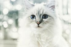 Choupette, Kucing Karl Lagerfeld yang Jadi Bintang Instagram