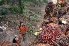 Asosiasi: Pemerintah Akan Kaji Pencabutan Pungutan Ekspor CPO