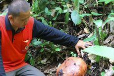 Jangan Lakukan 4 Hal Ini saat Melihat Bunga Rafflesia Arnoldii