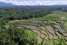 Influencer Ini Hapus Akunnya karena Postingan tentang Petani Bali