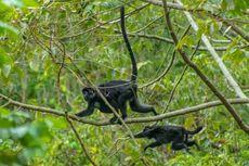 Jual Lutung hingga Kura-kura Moncong Babi, 9 Orang Ditahan