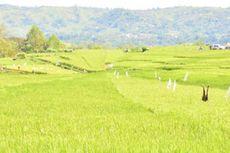 Bulog Tawarkan Program Usaha Tani untuk Kabupaten Lingga