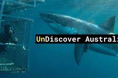 Waktu Malam dan Satwa Laut, Daya Tarik Wisata yang Tersembunyi dari Australia