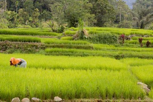Kementan: Irigasi Perpompaan Punya Manfaat Besar untuk Petani