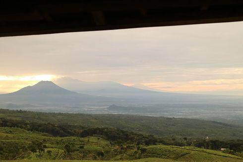 Berita Foto: Jelajah Perkebunan Teh Kertowono