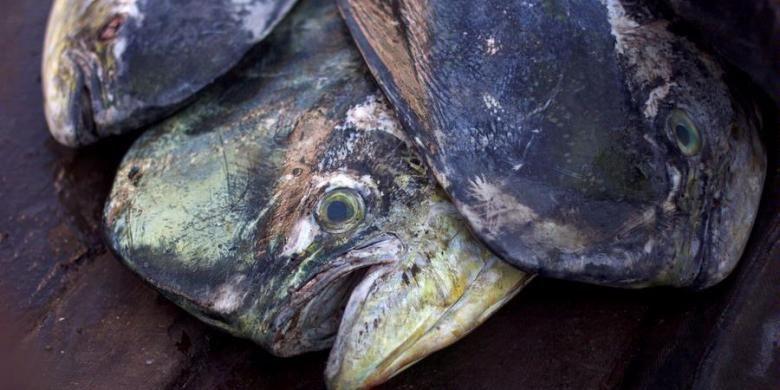 Ikan yang siap diantar diatas becak motor di Pasar Peunayong, Banda Aceh, Nanggroe Aceh Darussalam, Kamis (14/2/2013). Sumber daya laut Indonesia yang melimpah berpotensi menjadi negara eksportir ikan laut kelas dunia. Dibutuhkan komitmen yang kuat dari pemerintah dan pemangku kepentingan lain untuk mengembangkan sektor kelautan dan perikanan secara berkelanjutan.