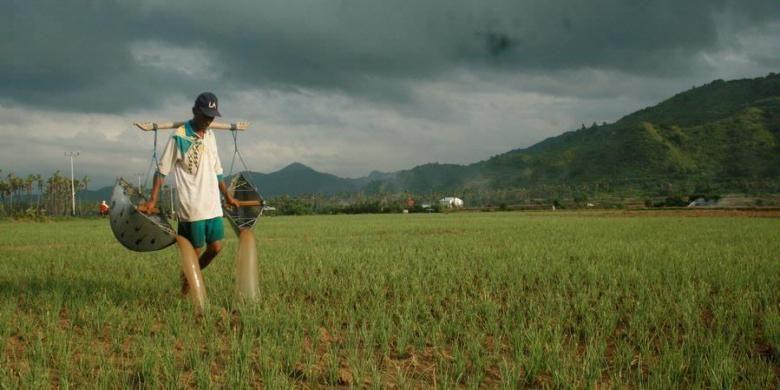 Petani bawang merah di Lambu, Kabupaten Bima, Nusa Tenggara Barat sedang menyiram tanaman bawang merah menggunakan boru, Senin (4/3/2013). Sebagian petani bawang merah di Lambu mulai beralih dari penggunaan benih umbi menjadi benih biji yang hemat biaya produksi dan memberikan panen lebih banyak.