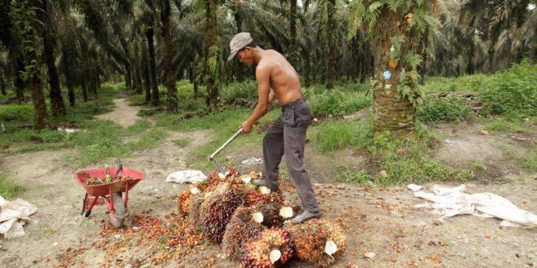 Ilustrasi perkebunan kelapa sawit