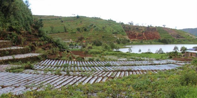Tiga Masalah Utama Sektor Pertanian Nasional Apa Saja Kompascom