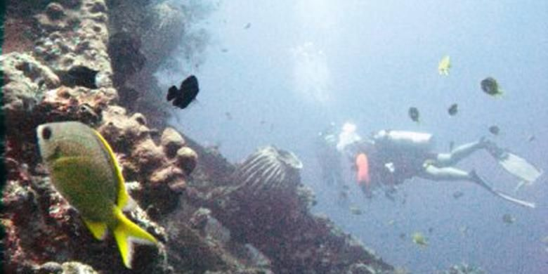 Penyelam menikmati ekosistem bawah laut di bangkai kapal perang USS Liberty yang karam dihantam torpedo Jepang di perairan Tulamben, Karangasem, Bali, Sabtu (5/10/2013). Aneka jenis karang dan ikan tumbuh sehat, di antaranya karena warga yang memperoleh manfaat dari membanjirnya wisatawan asing dan domestik turut melindungi kawasan itu.