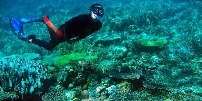 Seorang pengunjung menikmati keindahan alam bawah laut Pulau Labengki, Sabtu (4/5/2013). Aneka ragam terumbu karang menjadi salah satu keistimewaan pariwisata di Pulau Labengki, Konawe Utara, Sulawesi Tenggara.