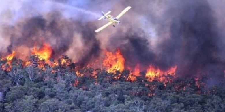 Ilustrasi kebakaran hutan.