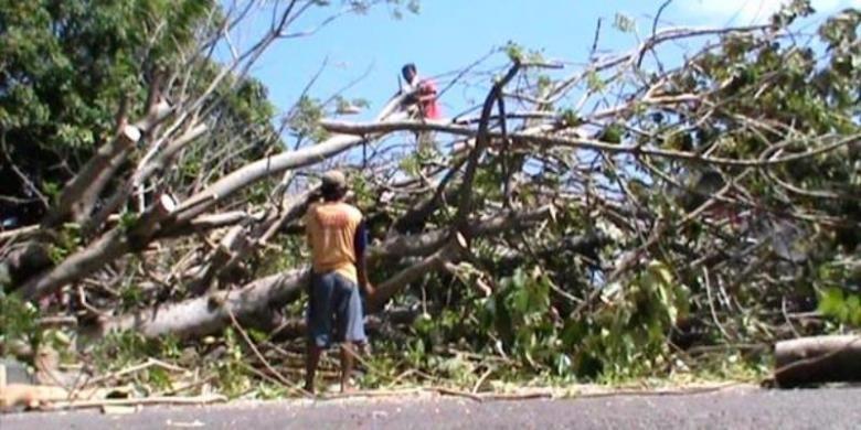Ilustrasi pohon tumbang.