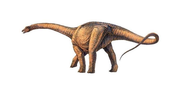 Ilustrasi dinosaurus terbesar yang ditemukan di Argentina.