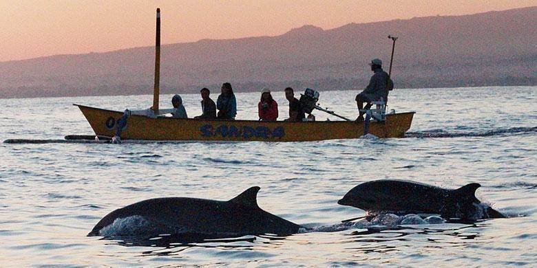 Wisatawan melihat dari jarak cukup dekat lumba-lumba yang muncul di permukaan di Pantai Lovina, Singaraja, Bali.