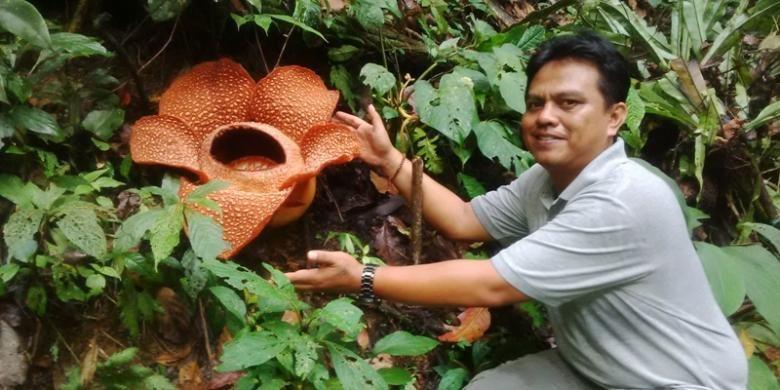 Wisatawan berpose di dekat bunga rafflesia yang mekar di Bengkulu.
