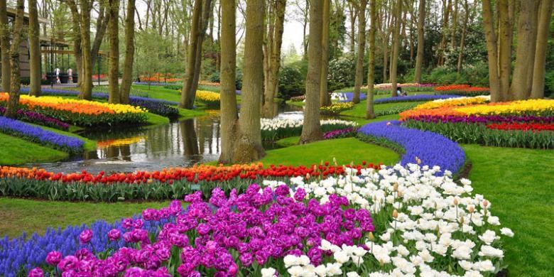 5 Tempat Terbaik Untuk Menyaksikan Musim Tulip Di Belanda Halaman All Kompas Com