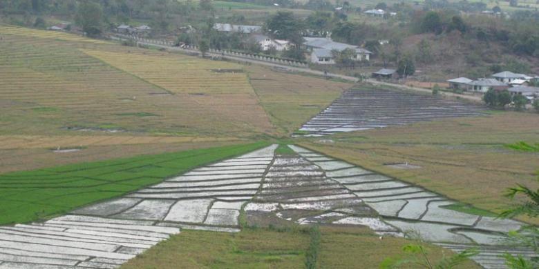 Persawahan Lodok di Lembor yang terletak di pinggir Jalan    Transflores tujuan Labuan Bajo-Ruteng, Nusa Tenggara Timur.