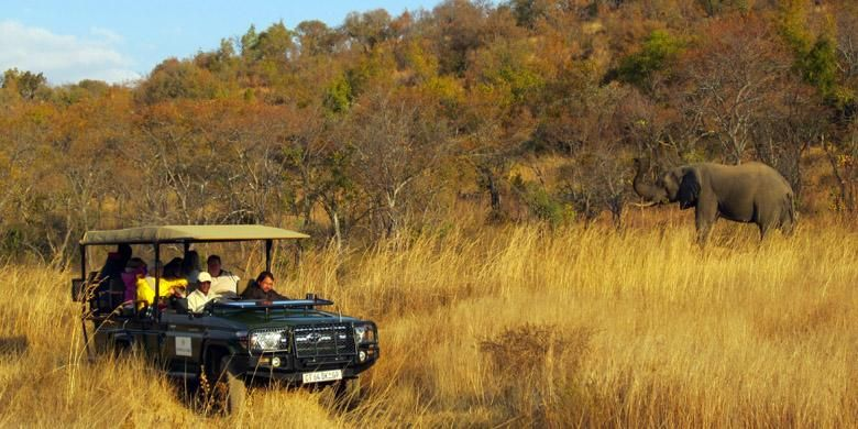 Suasana safari di Welgevonden Game Reserve, taman konservasi hewan liar di Vaalwater, Limpopo, Afrika Selatan, 29 Mei-4 Juni 2015.