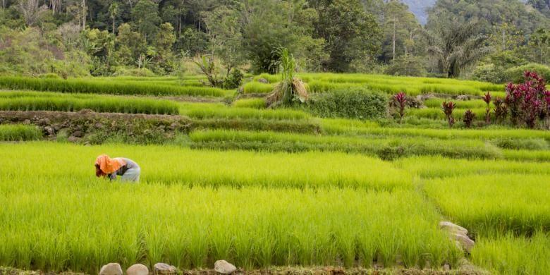 Kesadaran Petani akan Program Asuransi Pertanian Terus Meningkat