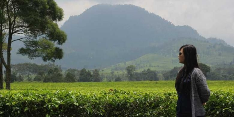 Seorang pengunjung berfoto di dengan latar pohon teh sejauh mata memandang di Kebun Teh Malabar, Pangalengan, Jawa Barat.