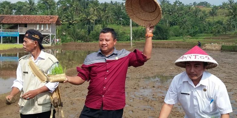 Bupati Tasikmalaya Uu Ruzhanul Ulum menanam padi organik di pesawahan Kecamatan Cisayong, Kabupaten Tasikmalaya, Jumat (8/4/2016).
