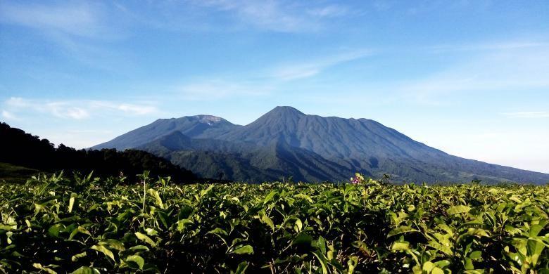 Puncak Gunung Gede dan Gunung Pangrango dapat terlihat dengan jelas dari Gunung Kencana, Jumat (6/5/2016). Di jalur pendakian ke Gunung Kencana banyak sekali ditemukan perkebunan teh nan hijau di sisi kiri dan kanan jalan.