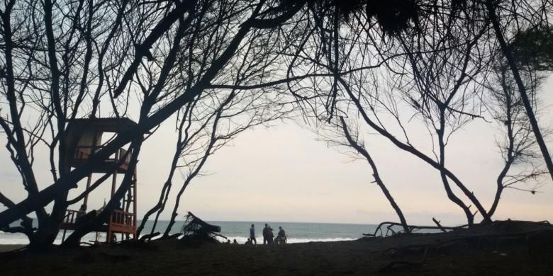 Pantai Goa Cemara di Desa Gadingsari, Kecamatan Sanden, Bantul, Yogyakarta dipenuhi rimbun pohon cemara di kanan-kiri jalan dengan dahannya yang menjuntaisaling bertemu membentuk gapura.