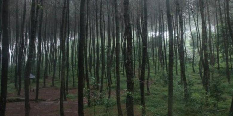 Kragilan Top Selfie di Magelang, Jawa Tengah. Kragilan Top Selfie ini disebut-sebut hampir serupa dengan hutan yang ada di Pulau Nami, Korea.