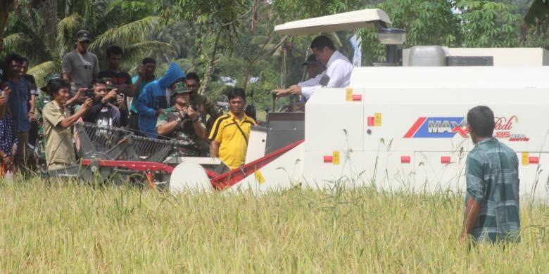 Foto suasana Menteri Pertanian Gelar Panen Raya Padi di Desa Masamba ,Poso Peisisr pada Selasa (13/12/2016)
