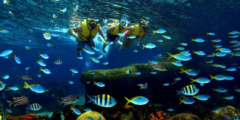 Snorkeling di Adventure Cove Waterpark