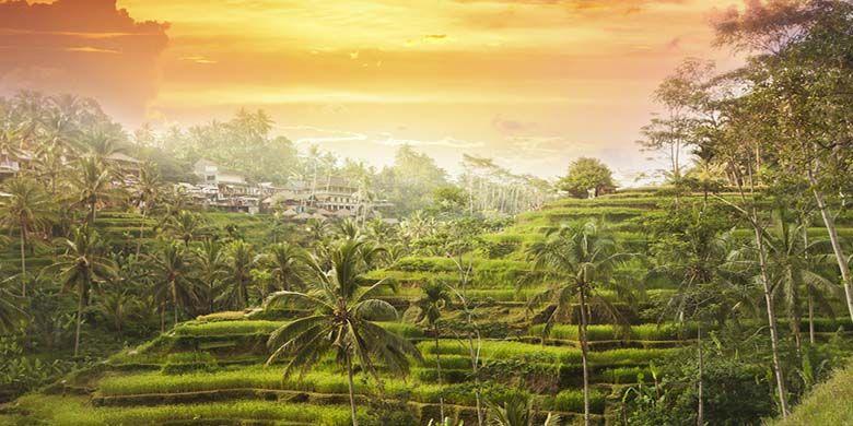 Hamparan Terasering di Ubud