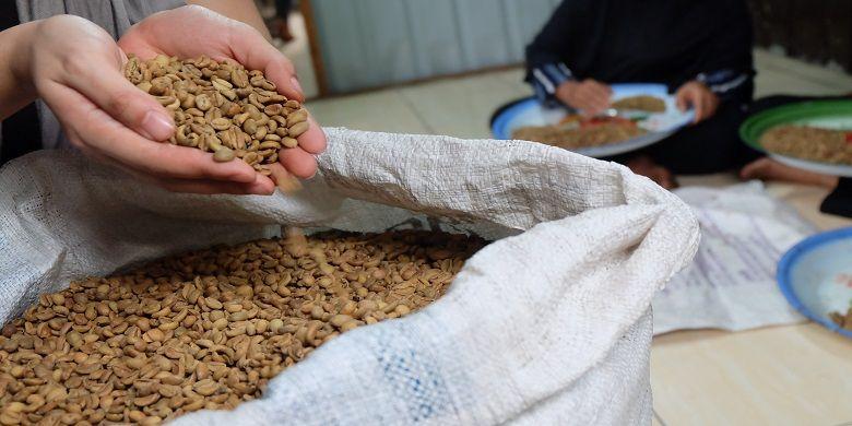Kopi Liberika Meranti dalam wujud biji kopi beras.