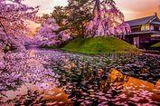 Musim Semi di Jepang, Waktu Terbaik Mengunjungi Aomori