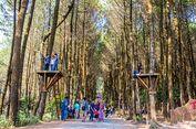 """4 Tips Berfoto Keren di Hutan Pinus Kragilan yang """"Instagramable"""""""