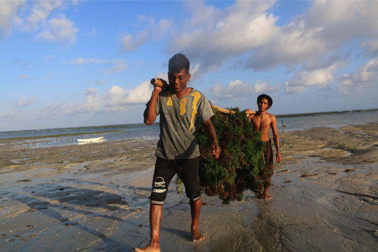 Budidaya rumput laut